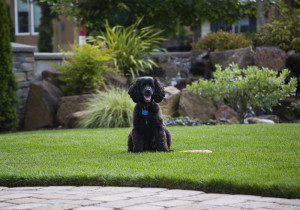 10-Landscaping-Tips-for-Building-A-Dog-Friendly-Backyard-in-Toronto