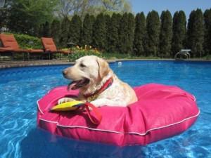 Dog-Pool-Float-Large-2